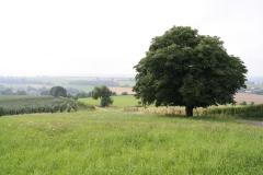 Eyserheide-Kastanjeboom-2