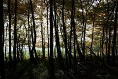 Schoonbron-Engwegen-043-Zonlicht-tussen-de-bomen-in-de-herfst