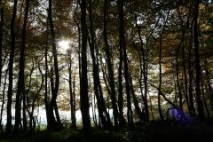 Schoonbron-Engwegen-044-Zonlicht-tussen-de-bomen-in-de-herfst
