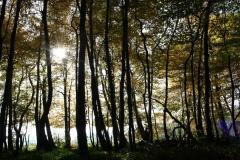 Schoonbron-Engwegen-045-Zonlicht-tussen-de-bomen-in-de-herfst