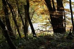 Schoonbron-Engwegen-056-Bos-in-de-herfst