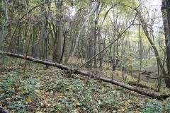 Strucht-Gerendal-033-Herfstbos