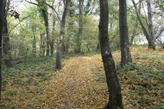 Strucht-Gerendal-036-Herfstbos