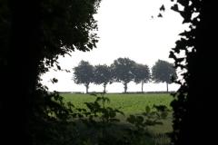 Bunde-023-Vijf-bomen