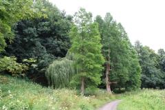 Elsloo-016-Verschillende-Soorten-Bomen
