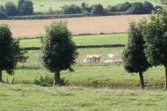 Eys-e.o.-120-Bomen-en-koeien