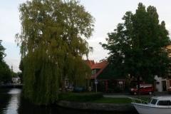Haarlem-0931-Boom-bij-Leidsebrug