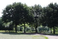 Huls-e.o.-109-Vergezicht-met-bomen