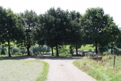 Huls-e.o.-110-Vergezicht-met-bomen