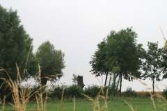 Puth-Windraak-106-Boom-met-neus-tussen-twee-bomen