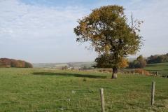 Schoonbron-Engwegen-025-Boom-in-de-herfst