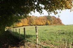 Schoonbron-Engwegen-032-Bos-in-de-herfst