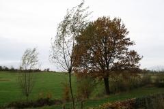 Strucht-Gerendal-083-Boom-in-herfstkleuren