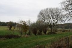 Strucht-Gerendal-084-Bomen-in-herfstkleuren