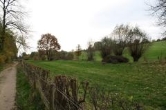 Strucht-Gerendal-086-Herfstlandschap-met-bomen