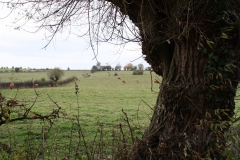 Strucht-Gerendal-095-Herfstlandschap-met-roodbruine-koeien