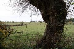 Strucht-Gerendal-096-Herfstlandschap-met-roodbruine-koeien