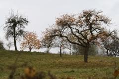 Strucht-Gerendal-122-Herfstlandschap-met-bomen