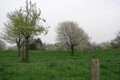 Maasband-13-Bloesem