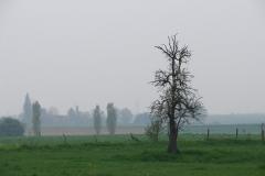 Maasband-19-Bloesem