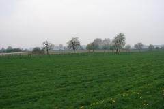 Maasband-41-Bloesem