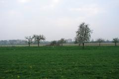 Maasband-44-Bloesem