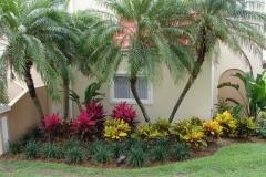 St.-Maarten-0128-Perk-vol-kamerplanten-en-palmbomen