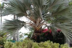 St.-Maarten-0154-Tropische-tuin-bij-hotel