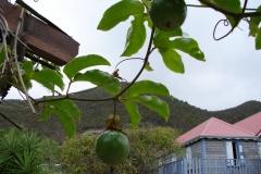 St.-Maarten-0231-Passievrucht-Plantage-Mont-Vernon