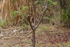 St.-Maarten-0233-Pruim-Plantage-Mont-Vernon