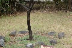St.-Maarten-0236-Mandarijn-Plantage-Mont-Vernon