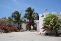 St.-Maarten-0721-Palmbomen