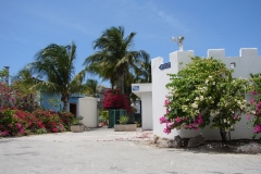 St.-Maarten-0727-Palmbomen