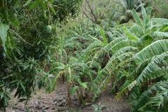 St.-Maarten-0785-Loterie-Farms-Planten