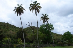 St.-Maarten-0805-Loterie-Farms-Tuin-met-palmen