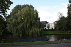 Alkmaar-381-Kwerenbolwerk-treurwilg
