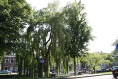 Haarlem-237-Treurwilg-bij-Groot-Heiligland