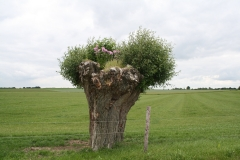 Reijmerstok-039-Knotwilg-met-begroeiing
