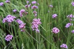 Artwalk-Hornerheide-Bloemen