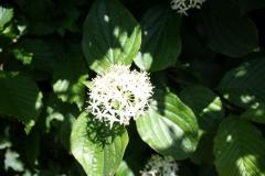 Geverik-en-Beek-046-Witte-bloem