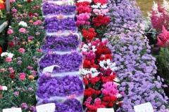 Haarlem-332-Bloemenmarkt-Paars-rode-bloemenzee