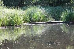 Huls-e.o.-169-Waterplas-bij-Simpelveld