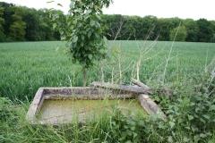 Sibbe-026-Waterbak-met-kroos