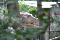 Dierenpark-Amersfoort-241-Dinosaurus