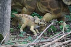 Dierenpark-Amersfoort-258-Centrosaurus-jonkie