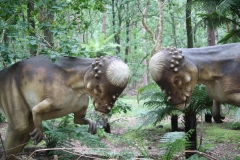 Dierenpark-Amersfoort-309-Pachycephalosaurus