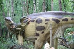 Dierenpark-Amersfoort-314-Veloraptor