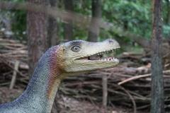 Dierenpark-Amersfoort-316-Veloraptor