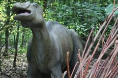 Dierenpark-Amersfoort-326-Probactrosaurus