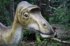 Dierenpark-Amersfoort-334-Maiasaurus